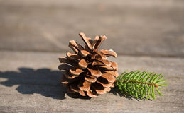 Brown pine cone. On a wooden background Stock Photos
