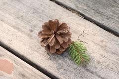 Brown pine cone Stock Images