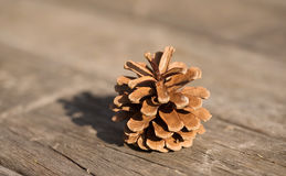 Brown pine cone. On a wooden background Royalty Free Stock Photos