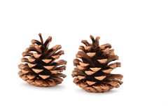 Brown pine cones isolated on white background Royalty Free Stock Image