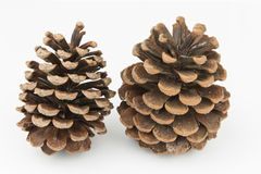 Brown pine cones isolated white background Stock Photos