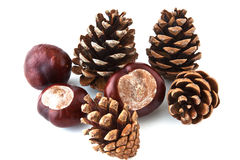 Brown pine cones scattered on a white background Stock Photography