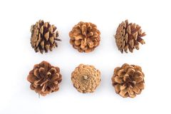 Brown pine cones  Royalty Free Stock Image