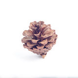 Brown pine cones On a white background Royalty Free Stock Image