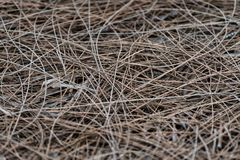 Brown pine needles lying on the ground stock image