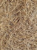Brown pine needles Royalty Free Stock Photography