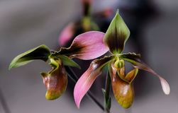 Brown, Pink, and Green Flowers stock photography