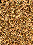 Brown Pinto Beans Stock Image