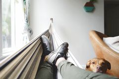 Brown Pit Bull Dog Leaning Head on Mans Legs Wearing Grey Pants Laying in Hammock Stock Photography