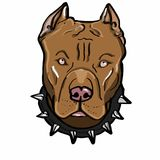 Brown pitbull dog illustration drawing illustration drawing and drawing illustration white background. Brown pitbull dog illustration drawing illustration Stock Images