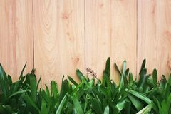 Brown plank wall in vertical patterns texture with nature green ornamental plants for background. Close up Brown plank wall in vertical patterns texture with royalty free stock image