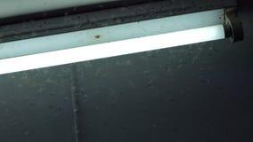 ฺBrown planthopper flying around neon light.