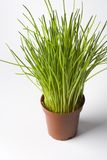 Brown Plastic Pot With Chives Royalty Free Stock Photos