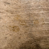 Brown plywood texture Stock Image