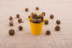 Brown pod, capsule in and around bucket on canvas. Brown pod, capsule in and around mini bucket on canvas stock image