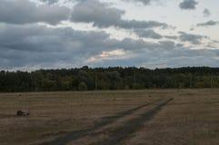 Brown pole z drzewami dalekimi Zmrok - niebieskie niebo i trawa upadek Zdjęcia Stock