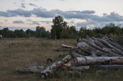 Brown pole z drzewami dalekimi Zmrok - niebieskie niebo i trawa upadek Fotografia Royalty Free
