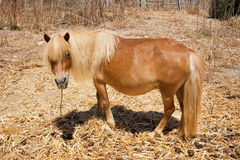 Brown pony Stock Photo