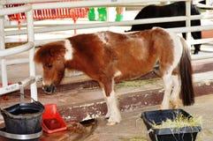 Brown-Pony Stockbilder