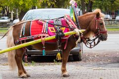 Brown pony with carriage buggy for children in city street. Royalty Free Stock Photo