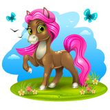 Brown pony with pink tail Stock Photos