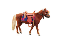 Brown pony. With saddle standing and isolated on white background Royalty Free Stock Images