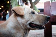 Brown psa siedzieć plenerowy Zdjęcia Stock