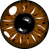 Brown pupil Royalty Free Stock Image
