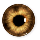 Brown pupil Stock Photo