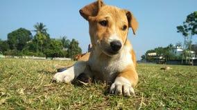 brown puppi stock photo
