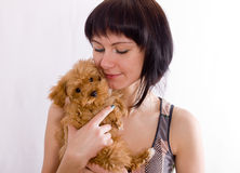 Brown puppy Stock Photography