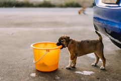 Brown puppy are biting the tank of car wash. Brown pupply are biting the tank of car wash royalty free stock images