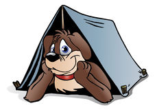 Brown Puppy Dog camping Stock Photo