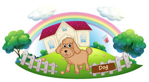 A brown puppy in front of a house Royalty Free Stock Photos