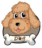 A brown puppy. Illustration of a brown puppy on a white background Stock Images