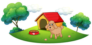 A brown puppy playing ouside the dog house Stock Image