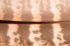 Brown Quill Pattern Macro per gli ambiti di provenienza Fotografia Stock Libera da Diritti