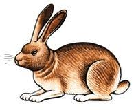 Brown rabbit Stock Photos