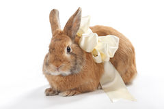 Brown rabbit with a beige bow Stock Images