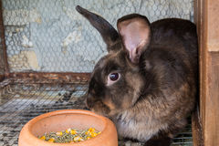 Brown rabbit in the cage Royalty Free Stock Photo