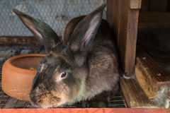 Brown rabbit in the cage Stock Images