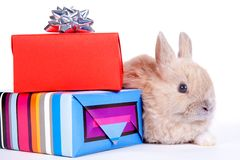 Brown rabbit and christmas boxes, isolated Royalty Free Stock Photography