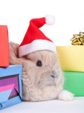 Brown rabbit and christmas boxes, isolated Royalty Free Stock Images