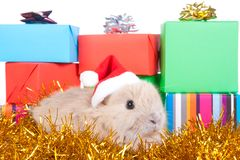Brown rabbit and christmas boxes, isolated Royalty Free Stock Photos