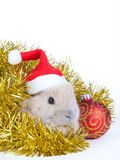 Brown rabbit and christmas decoration, isolated Stock Images