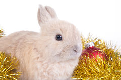 Brown rabbit and christmas decoration, isolated Royalty Free Stock Image