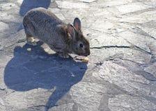 Brown rabbit Stock Images