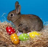 Brown rabbit and easter eggs Stock Photos