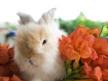 Brown rabbit eating morning calm flower Stock Images
