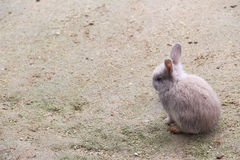 Brown Rabbit. On the ground Royalty Free Stock Photos